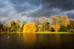 Sunlit Willow (RCARCARCA) Tags: sunshine willow storm water reflections canon 2470l clouds trees bright verulamium weepingwillow birds vivid green golden verulamiumpark sky park stalbans yellow 5diii lake