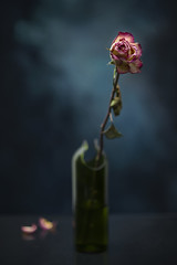 Fragile Rose (Bert Pot) Tags: flower vase stilllife studio flowerpower nikon nikond800 d800 85mm