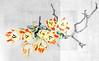 Contrasts II (macplatti) Tags: tulpe tulips color contrast koblach vorarlberg austria aut
