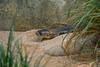 DSC_0172 (kubek013) Tags: stuttgart germany niemcy deutschland wycieczka wanderung trip sightseeing besichtigung stadt city citytour stadtrundfahrt zwiedzanie zoo wilhelma
