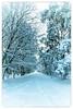 It's a QUITE little Place (Habitualmurph) Tags: snow ireland kildare thecurragh canon70d end days