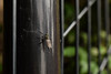 DSC_0585 (Hachimaki123) Tags: 日本 japan kyoto 京都 永観堂 eikando zenrinji 禅林寺 animal insect insecto 虫 動物
