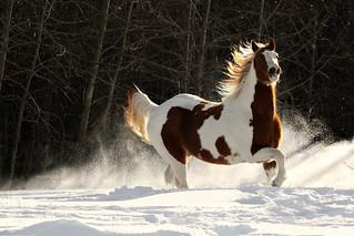 ~Snow Dance~