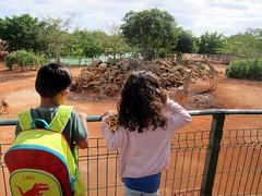 01-13-18 Animaya Afternoon 05 (Leo & Luna) (derek.kolb) Tags: mexico yucatan merida family