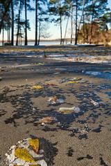 20 A sidewalk wk3 8J10539- (Kathleen Muhle) Tags: 2018photochallenge 201801tx icestorm scenic shore winter storm inga kingwoodtx