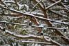 samsebeskazal-2208.jpg (samsebeskazal) Tags: winter newjersey ringwood
