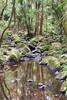 AH Reed Memorial Park 1 (Kiwi Jono) Tags: nature walk new zealand water bush rocks moss dfa28105f3556 pentax pentaxk1