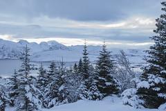 Winter in lofoten (___pete___) Tags: norway lofoten polar night winter road trip islands