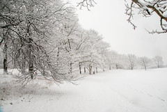 SP-1.26.15_048 (Nikon Guy 56) Tags: winter nature snow southpark alleghenycounty nikon d60 trees landscape winterscape