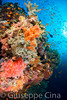 _DSC3799.jpg (pinocnt) Tags: bigbrotherisland crociera cruise egitto egypt myaldebaran marrosso redsea underwater vacanza