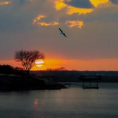 Arlington Lake Sunset. (WWW.ROBERTBELLOMY.COM) Tags: birds sunrise clouds fujifilmx seagull seagulls lake sunset ifttt instagram