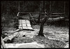 !IMG_20180114_0003 (Kuba Gornowicz) Tags: diy 5x7 tessar eukobrom foma paper negative analog forest wood trees