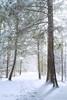 Brief Sun on a Snowy Day (debbie_dicarlo) Tags: kendallhills unitedstates virginiakendallledges nationalpark cvcp snow snowy park pathway snowcovered nature ohio