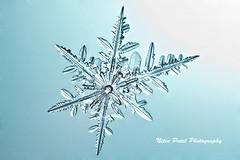 IMG_2423 (nitinpatel2) Tags: snowflakes winter snow macro crystal nature nitinpatel