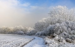 *winter magic* (albert.wirtz) Tags: unpavedroad feldweg fog mist misty sunny foggy dusty dunst nebel nebbia laniebla niebla brume bruma brouillard raureif hoarfrost snow landscape paesaggi passages landschaft feld acker field icy eifel vulkaneifel moseleifel hontheim stiefelbaum wandern wanderweg walking trail eifelsteig rheinlandpfalz rhinelandpalatinate deutschland germany natur nature landkreisbernkastelwittlich wittlicherland wintermagic winterzauber tree bäume sträucher enchanted
