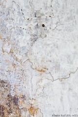 Camouflaged juvenile bark mantis (pbertner) Tags: camouflage rainforest southamerica sanilodge saniproject2017 yasuninationalpark prayingmantis mantodea amazon