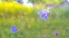 Dream land (- A N D R E W -) Tags: canon 80d 1855mm nature naturaleza bokeh light luz