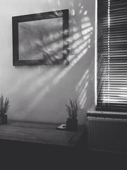 """""""There may be more beautiful times, but this one is ours."""" – Jean-Paul Sartre (Gabriel McLaren) Tags: featured explore inexplore warmth warm spring summer household decoration plant shrubs blinds building home house environment abstract jeanpaulsartre tso quote bw blackandwhite steam vapour smoke light refraction beam sunbeam sunshine sun"""
