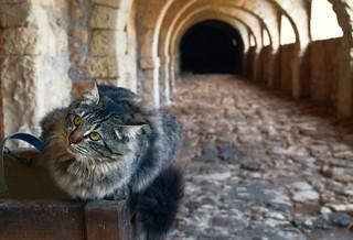 In the old castle - Στο κάστρο το παλιό