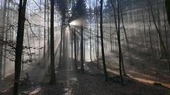 Sunlight (Aah-Yeah) Tags: sunlight sunbeams sunrays sunshine sunbeam sunray sonnenstrahlen sonnenlicht sonnenschein sonnestrahlen nebel fog wald forest achental chiemgau bayern