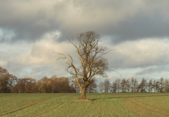 Visiting an Old Friend (S Marwood) Tags: northyorkmoors nationalpark hill hillside tree winter sky cloud field arable farm farming crop trees horizon canon canon700d 50mm yorkshire tramline sun sunny january landscape scape countryside rural helmsley nature country light shade shadow