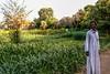 Elephantine, Aswan (bruno vanbesien) Tags: aswan egypt misr people tree أسوان eg