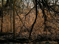 alongside the creek (Jayne Reed) Tags: forest woods trees winter kansas