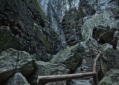 Aufstieg (lebastian) Tags: panasonic dmcgx8 olympus m1240mm f28 saxony sächsische schweiz mountain berg felsen stufen sachsen