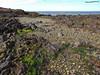 Playa Camarones 2 (pniselba) Tags: argentina camarones chubut beach ocean oceano mar sea playa