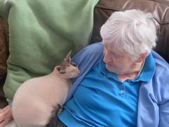 Max & Nana I (edenpictures) Tags: nana kathleen max cat cornishrex