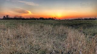 Deer at sunset, Odijk, Netherlands - 0596