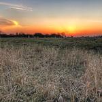 Deer at sunset, Odijk, Netherlands - 0596 thumbnail