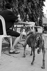 Hungry (gergelytakacs) Tags: angkor asia cambodge cambodia fareast kampuchea khmer kingdomofcambodia siemreap animal bw begging bitch blackandwhite bystander calle candid canine chair city documentary dog doggy eat eatery female flâneur food hungry man mongrel monochrome mutt pet photo photography pooch pregnant public restaurant rue space strada stranger stray strasenfotografie street streetphotographer streetphotography streetphotgraph streetphotgrapher streetphotgraphy streetphoto streets streetscape table travel tree ulica unposed urban urbanphoto urbanphotographer urbanphotography utcafotó улица רחוב ក្រុងសៀមរាប ព្រះរាជាណាចក្រកម្ពុជា