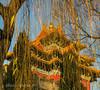 Chine, Pékin, la cité interdite (louis.labbez) Tags: chine ville china town labbez asie asia pékin beijing cité interdite palais palace empereur arbre tree roof toit dorure doré or jaune yellow