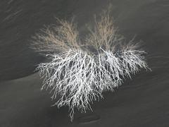Razelektritev / Discharge (Damijan P.) Tags: zima winter sneg snow slovenija slovenia prosenak