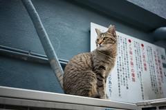 猫 (23fumi@fuyunofumi) Tags: ilce7rm3 sony 35mm sonnartfe35mmf28za cat neko gato animal street alley miyazaki sel35f28z emount ねこ 猫 ソニー 宮崎 路地