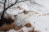 DSC_0127 (mjohnso) Tags: snow winter frozen pond newjersey nikond3000