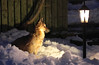 Waiting (Ahreraya) Tags: dog snow small lamp night