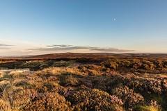 Deer Hill Aug 30th 2017 030 (Mark Schofield @ JB Schofield) Tags: huddersfield deerhill colnevalley yorkshire landscape canon eos 5dmk4 heather reservoir marsden