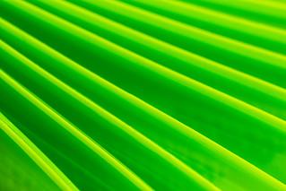 36/365: Think green...