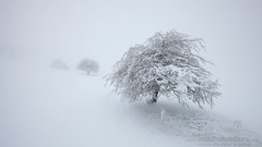 SUSPENSIVOS... (Obikani) Tags: snow tree trees winter white minimal urbasa andia nafarroa zen serene beauty canonikos fdlqalavavision18marzo