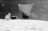 DOG VISIT AGAIN ;) (LitterART) Tags: deutschlanghaar laundry wäsche steiermark österreich kessel hund hunde dog dogs chien chiens cane
