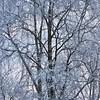 Tree (Stefano Rugolo) Tags: stefanorugolo pentax k5 pentaxk5 smcpentaxda1855mmf3556alwr tree branches light hälsingland sverige winter frost