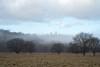 Ryton Willows (sunsetbeach) Tags: rytonwillows mistymorning wintermorning