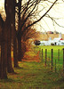 (suzcphotography) Tags: field autumn trees fenceline fence rural nature canon t3i