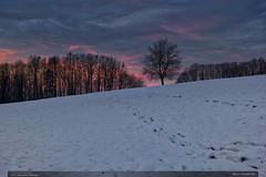 Sen o novém dni (jirka.zapalka) Tags: krajina landscape winter snow morning czech trees clouds forest