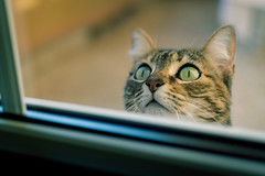 Cat (sam.villaver) Tags: animales gato animal cat soft softness desenfoque pet mascota profundidaddecampo depthoffield d3100 nikon