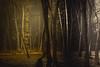 The more the dark consumes me, I pretend I'm burning (HardDriveKC) Tags: 50 50mm 500mm f18 art lightroom adobe dslr digitalslr photograph camera nikon digital missouri photo photography states unitedstatesofamerica united america unitedstates jacksoncounty d3400 land lights night kansascity ngc awardtree