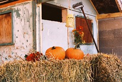 Little House, some Pumpkins (Cherry Choice Photo) Tags: outside nature hay pumpkins orange color colour film photography rake house country