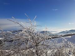 #gelo#pianta#montagne#neveinverno#sanmarino (Mastercaio76) Tags: pianta gelo sanmarino montagne neveinverno